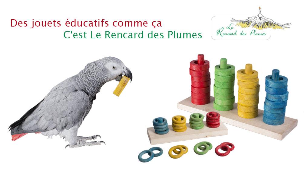jouets-educatifs-perroquets-grands-perro