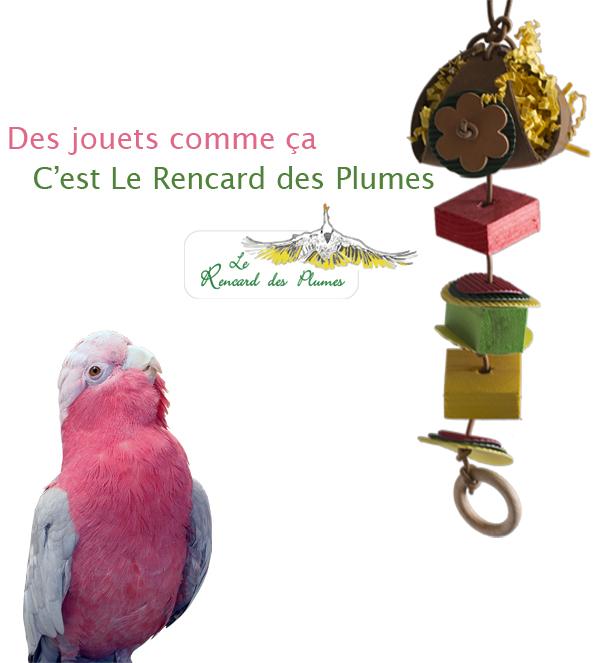jouets-foraging-cuir-bois-perroquet-perr