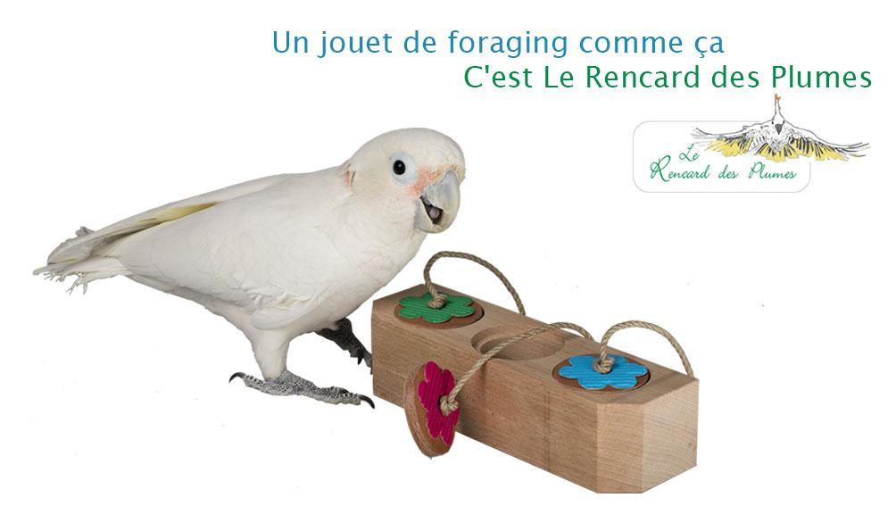 jouets-perroquet-jouet-foraging-pour-per