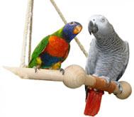 Boutique de jouets et accessoires pour perroquets et perruches