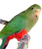 Boutique de jouets et accessoires pour perruches
